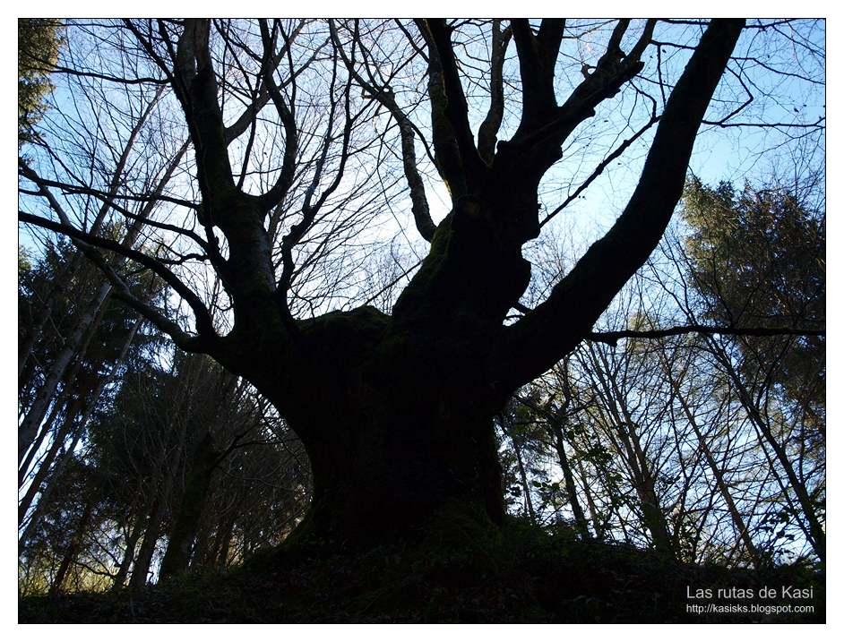 photo P4060860.jpg